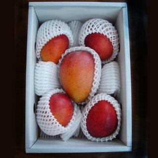 久米島マンゴー 優品1キロ