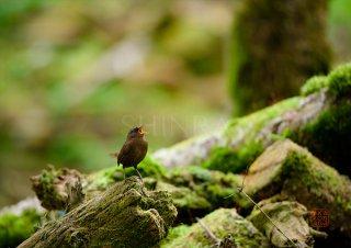 苔生す森に生命を謳う・額装付