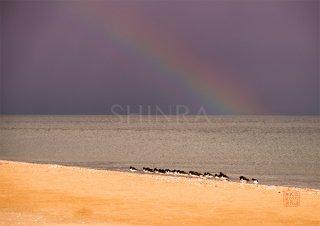 虹かかる海に・額装付