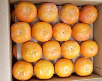 九度山の富有柿(生柿)ご家庭用:20〜26個入り 画像