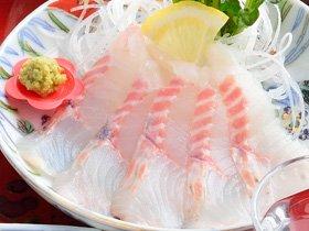 チョウザメ鮮魚_写真