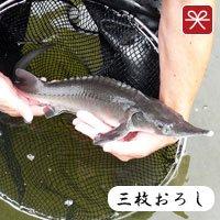 チョウザメ鮮魚三枚おろし_メイン