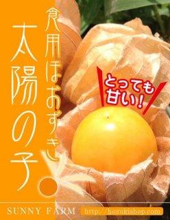 食用ほおずき「太陽の子」の種20粒(送料無料)