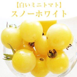 【白いミニトマト!?】スノーホワイトの種20粒(送料無料)