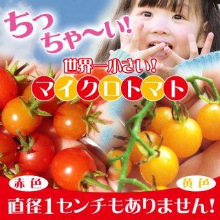 【世界最小トマト】マイクロトマト赤色・黄色の種 各10粒ずつ20粒(長野県産)