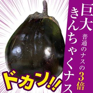【デカさ3倍】巨大キンチャクナスの種10粒(送料無料)
