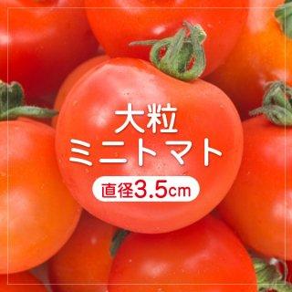 【ミニなのに大きい?】大粒ミニトマトの種15粒〜食べごたえバツグン〜(送料無料)