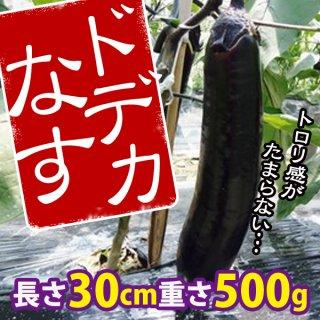 【大型美味ナス】ドデカなすの種 10粒〜トロリとうま〜い!〜(送料無料)