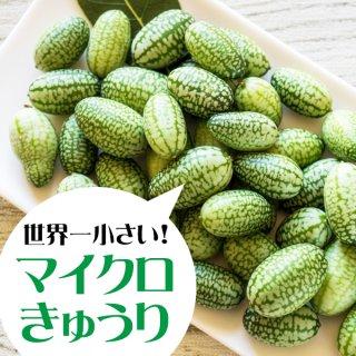 【世界一小さいきゅうり】マイクロきゅうりの種 20粒(送料無料)