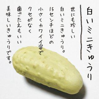 【カワイイ♡】白いミニきゅうりの種 10粒(送料無料)