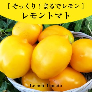 【まるでレモン!】形も色もそっくり!レモントマトの種10粒(送料無料)