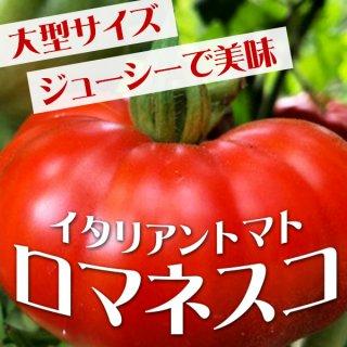 【大型ジューシー美味トマト】イタリアントマト・ロマネスコの種10粒(送料無料)