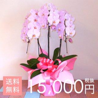 大輪胡蝶蘭3本立ち 27輪以上 ピンク
