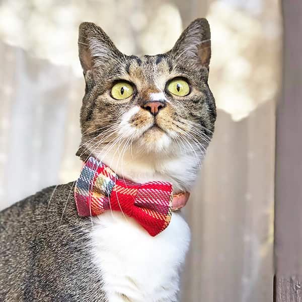 猫の首輪|チェック&リボン