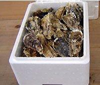 生食用 大粒殻付き牡蠣 (50個入) *他の商品と合わせてご注文の際、別途送料を頂く場合がございます。ご了承ください。*
