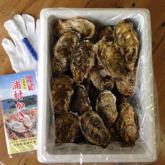 生食用 大粒殻付き牡蠣 (100個入)  *他の商品と合わせてご注文の際、別途送料を頂く商品がございます。ご了承ください。*
