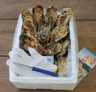 生食用 中粒殻付き牡蠣 (30個入) *他の商品と合わせてご注文の際、別途送料を頂く商品がございます。ご了承ください。*