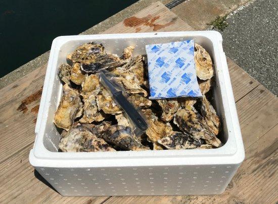 加熱用 不揃い殻付き牡蠣(約100個入)   送料 (常温普通便)込み※一部地域は別途送料の追加料金を頂きます。