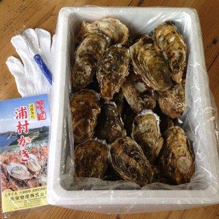 生食用 中粒殻付き牡蠣 (100個入) *他の商品と合わせてご注文の際、別途送料を頂く商品がございます。ご了承ください。*