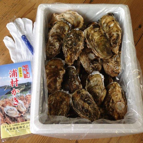 生食用 中粒殻付き牡蠣 (50個入)  *他の商品と合わせてご注文の際、別途送料を頂く商品がございます。ご了承ください。*