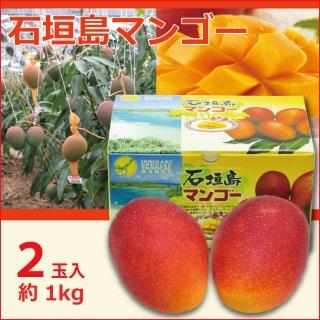 沖縄石垣島マンゴー  1kg(2玉)