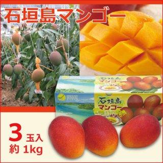 沖縄石垣島マンゴー  1kg(3玉)