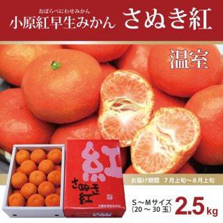 小原紅早生「さぬき紅」温室みかん2.5kg S〜Mサイズ 【お中元】【夏ギフト】