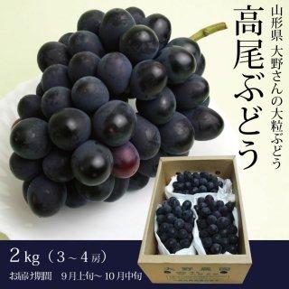 【生産者限定】大野さんの大粒ぶどう「高尾」2kg