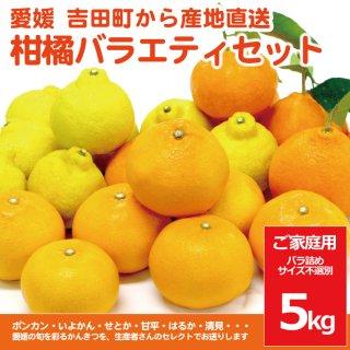 愛媛柑橘バラエティセット【ご家庭用5kg】