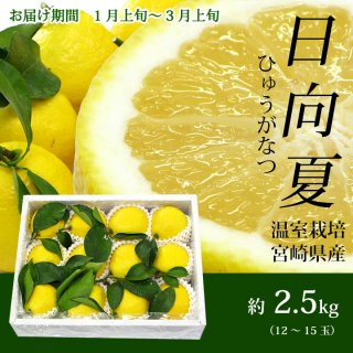 宮崎県産日向夏【ご贈答用】2.5kg(12〜15玉入)