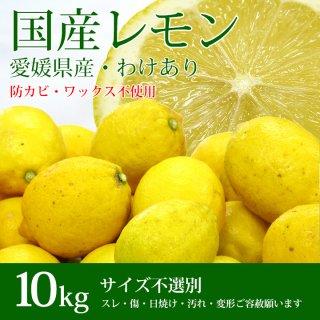 愛媛県産レモン【わけあり】たっぷり10kg!防カビ剤、ワックスを一切使用していないので塩レモンやピール作りにも適しています♪