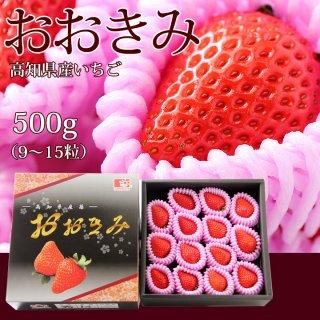 おおきみ(高知県産)500g(9〜15粒) 糖度15度以上の大玉いちご・化粧箱入【送料無料】