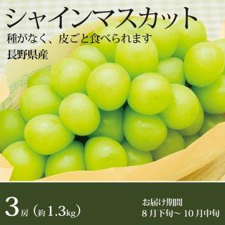 シャインマスカット3房(1.3kg)長野県産