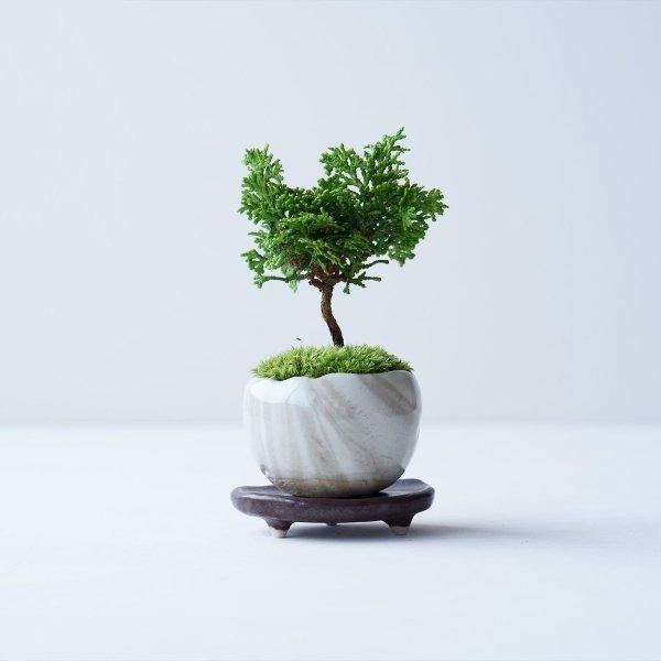 津山ヒノキ no.015