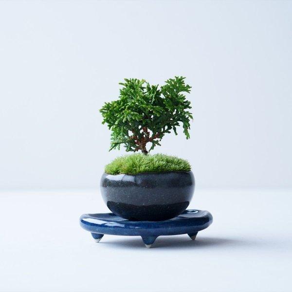 津山ヒノキ no.019