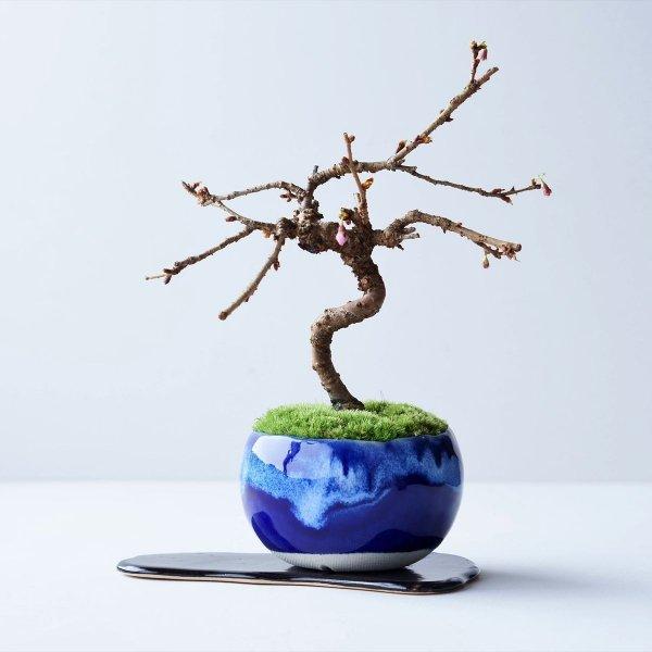十月桜 no.012