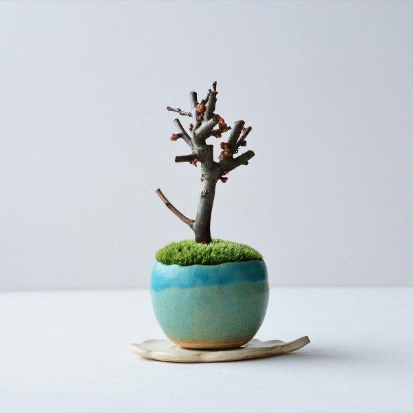 木瓜:長寿楽 no.002