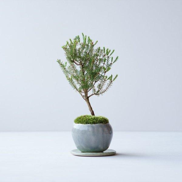 バレリーツリー no.016