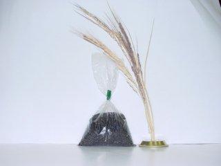 古代米  朝紫(黒米) 100g