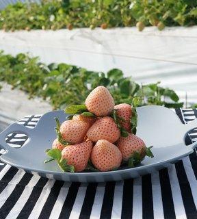 ちくごへいやのいちご エコフォーム特別栽培 淡雪(白いちご) 1箱720〜800g (1パック 180〜200g×4) ※クール配送費込み