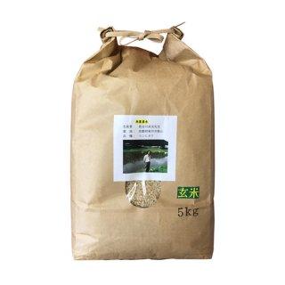 無農薬米 京都南丹市コシヒカリ 玄米 5kg 令和2年産 2020年産 【送料無料】