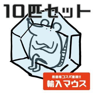 【輸入品】冷凍アダルトマウスM-10匹セット-