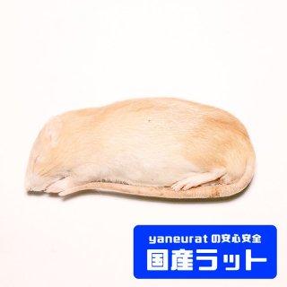【国産】冷凍アダルトラットS -150g-180g-