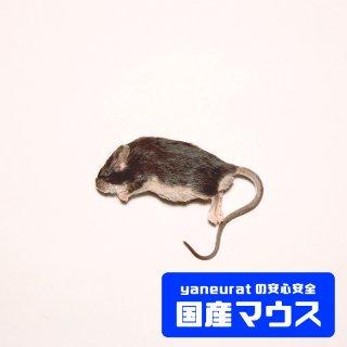 ホッパーマウス 10g-20g