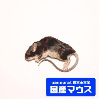 アダルトマウスM 25g-30g
