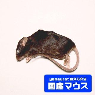 アダルトマウスLL 35g-45g