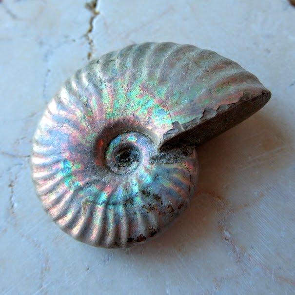 アンモナイト オパール化遊色 マダガスカル産 25g 化石