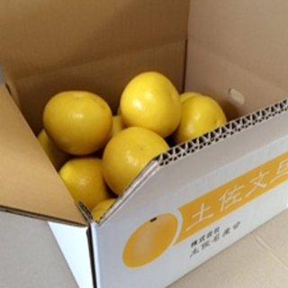 ※予約商品【ご家庭用】農薬をまいていない土佐文旦1箱(5kg)