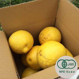 【ご家庭用】無農薬JAS有機栽培土佐文旦1箱(3kg)