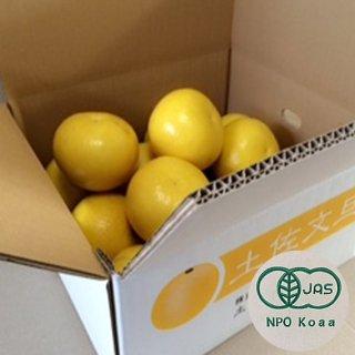 【ご家庭用】無農薬JAS有機栽培土佐文旦1箱(5kg)